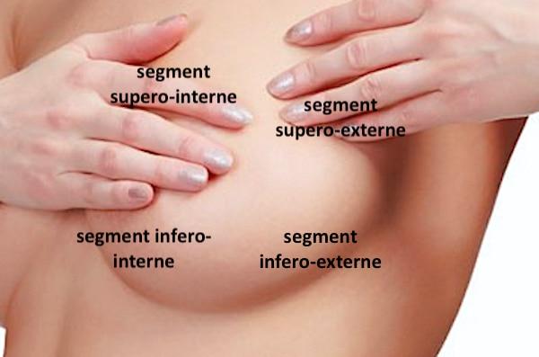 Zones ou segments anatomiques d'un sein normal