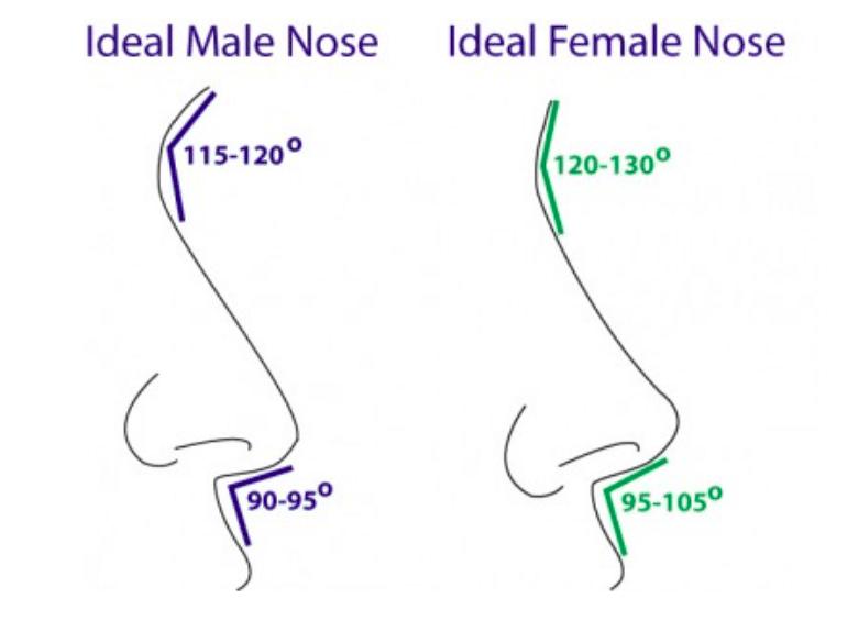 comparaison-anatomie-nez-homme-femme